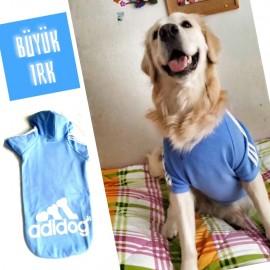 Mavi Adidog Cutie Kapşonlu Sweatshirt Orta ve Büyük Irklar İçin