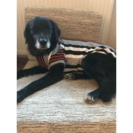 Colour brown Stripe Tişört Büyük Köpekler İçin
