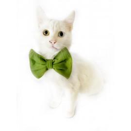 Green Fluff Kedi Papyonu