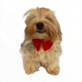 Red Velvet Kırmızı Kadife  Köpek Papyonu Köpekler için Papyon