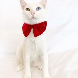 Red Velvet  Kırmızı  Kadife  Kedi Papyonu