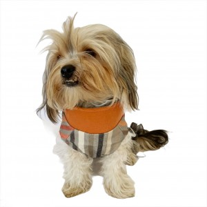 Stripe Orange Su itici Yağmurluk Köpek Yağmurluğu